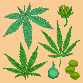 Coleção de folhas de cannabis botânicas
