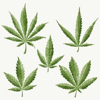 Coleção de folhas de cannabis em aquarela