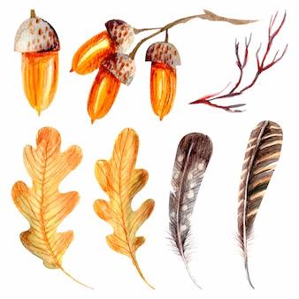 Coleção de folhas de carvalho