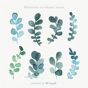 Coleção de folhas de eucalipto em aquarela