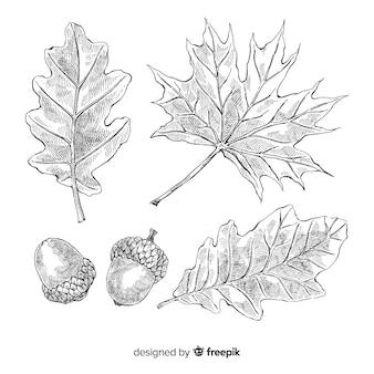 Coleção de folhas de outono desenhada mão realista