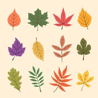 Coleção de folhas de outono desenhados à mão