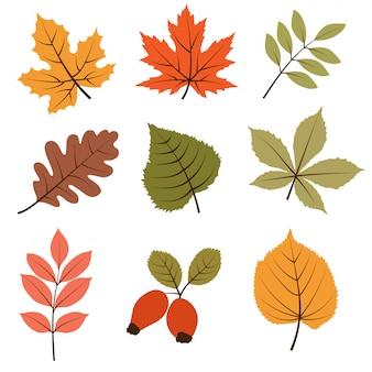 Coleção de folhas de outono isolada no fundo branco
