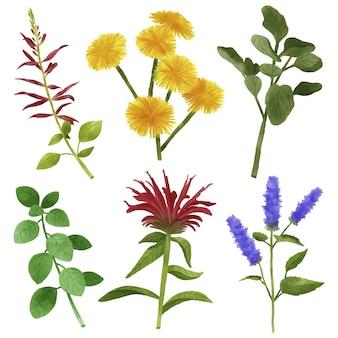 Coleção de folhas e flores