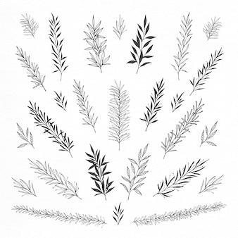Coleção de folhas e folhas elegantemente desenhadas