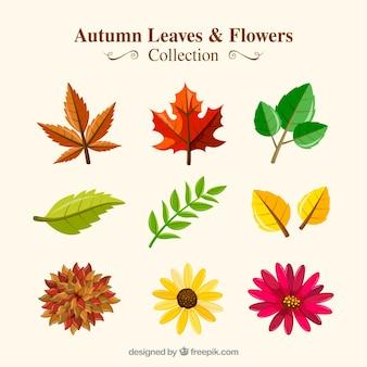 Coleção de folhas secas com flores outonais