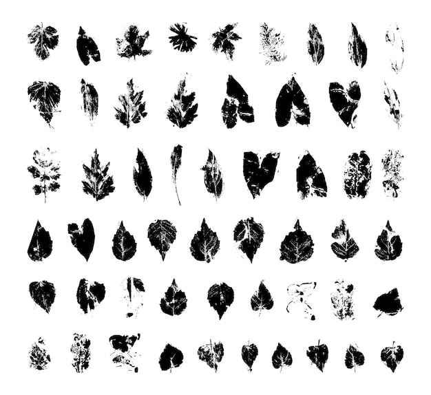 Coleção de folhas texturizadas
