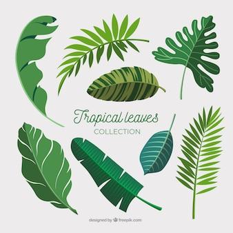 Coleção de folhas tropicais em design plano