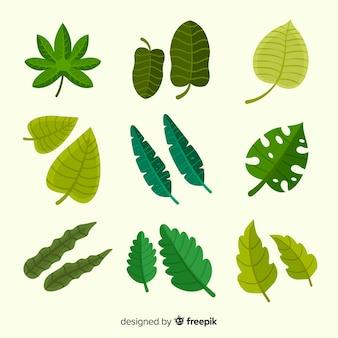 Coleção de folhas tropicais exóticas com design plano