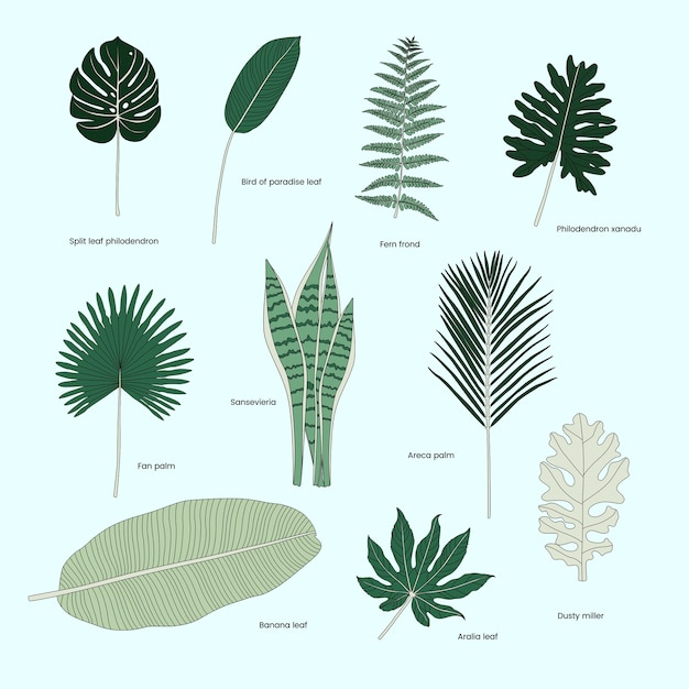 Coleção de folhas tropicais ilustradas