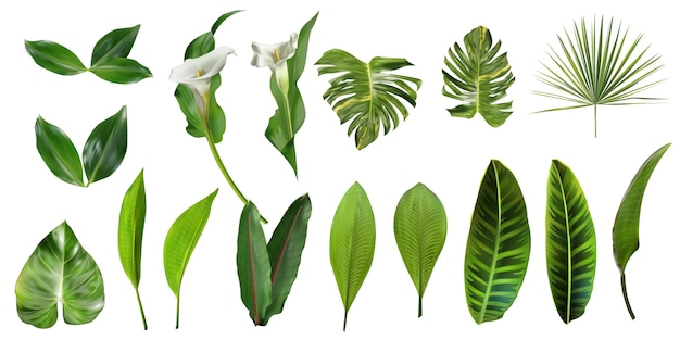 Coleção de folhas tropicais isolada