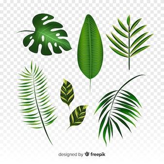Coleção de folhas tropicais realistas