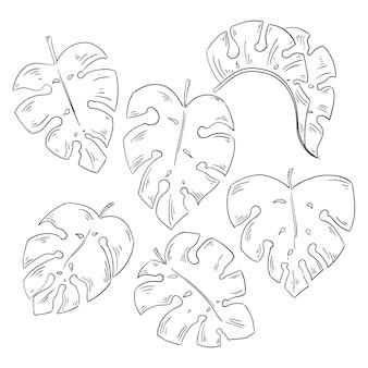 Coleção de folhas tropicais