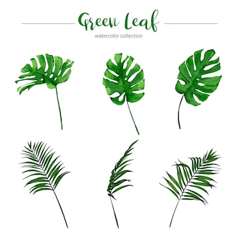 Coleção de folhas verdes aquarela ilustração