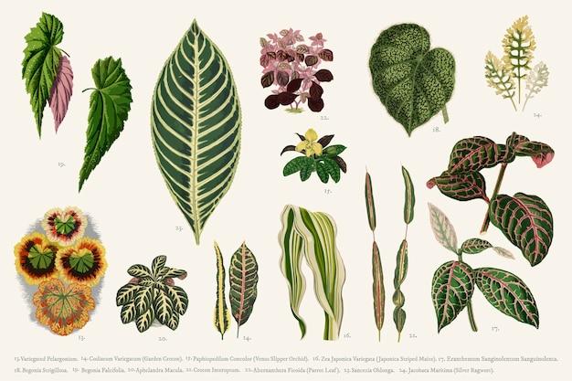 Coleção de folhas
