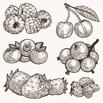 Coleção de frutas com contorno desenhado à mão