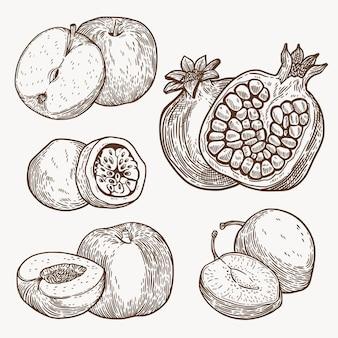 Coleção de frutas de ilustração desenhada à mão