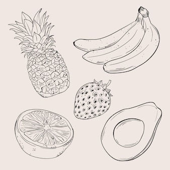 Coleção de frutas desenhadas à mão para gravura