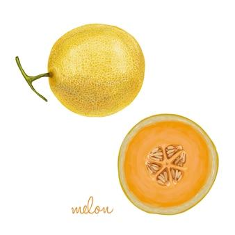 Coleção de frutas frescas suculentas