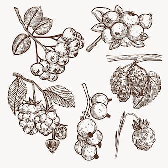 Coleção de frutas monocromáticas desenhada à mão