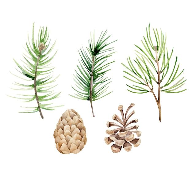 Coleção de galhos e cones de pinheiro