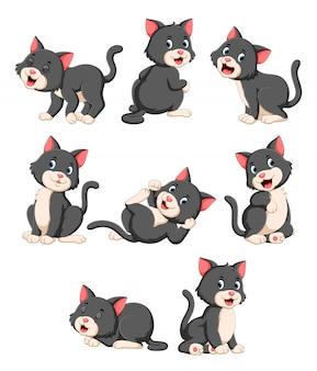 Coleção de gato bonito com vários posando