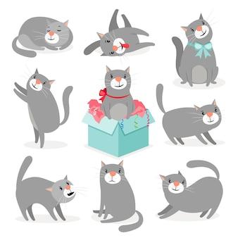 Coleção de gatos fofos cinza