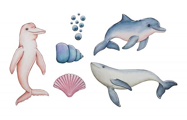 Coleção de golfinhos e conchas