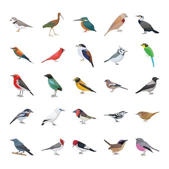 Coleção de ícones de vetor plana de aves