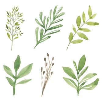 Coleção de ilustração de elemento de folhagem verde aquarela
