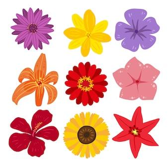 Coleção de ilustração de flores