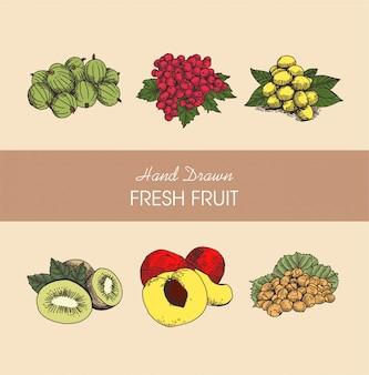 Coleção de ilustração de frutas