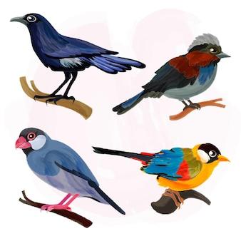 Coleção de ilustração de pássaro em aquarela