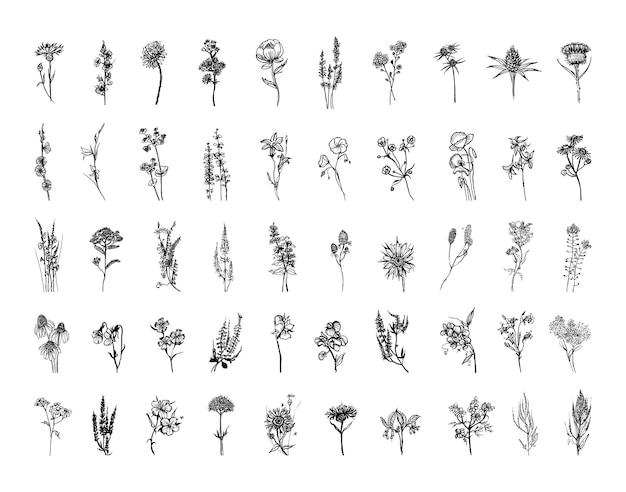 Coleção de ilustrações monocromáticas de flores do prado em estilo de desenho