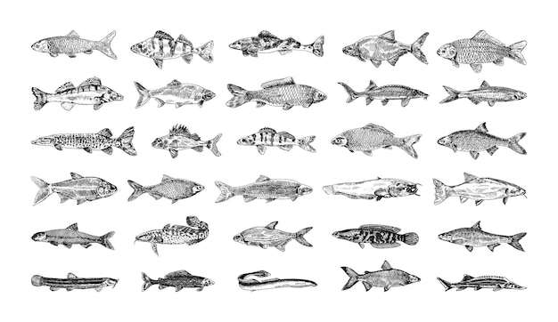 Coleção de ilustrações monocromáticas de peixes de água doce