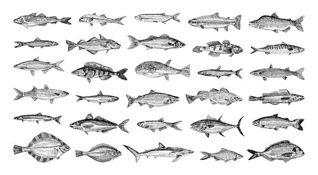 Coleção de ilustrações monocromáticas de peixes marinhos em estilo de desenho