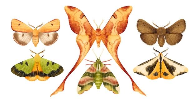 Coleção de ilustrações pintadas à mão em aquarela de borboleta mariposa