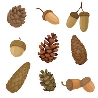 Coleção de imagens diferentes de bolotas e cones de abeto.