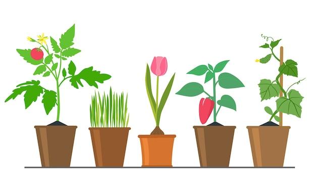 Coleção de imagens sobre o tema da jardinagem, mudas de várias plantas vegetais em vasos de flores