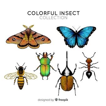 Coleção de insetos coloridos mão desenhada