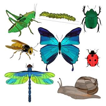 Coleção de insetos de desenho colorido