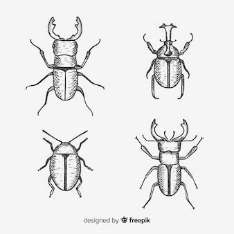 Coleção de insetos desenhada mão incolor