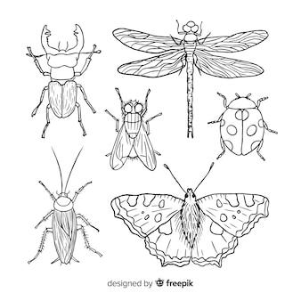 Coleção de insetos desenhada mão realista