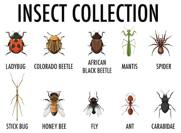 Coleção de insetos isolada