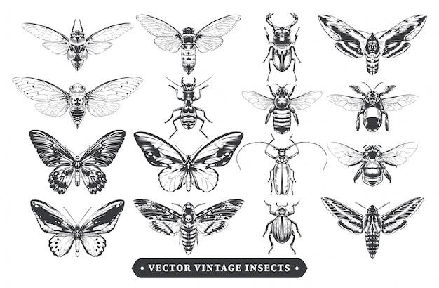 Coleção de insetos vintage