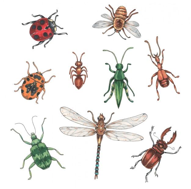 Coleção de insetos