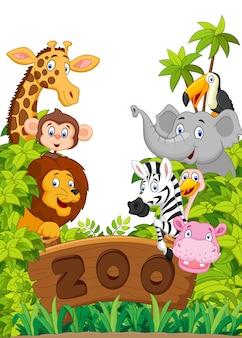 Coleção, de, jardim zoológico, animais