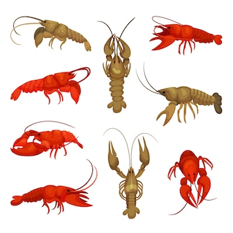 Coleção de lagosta em fundo branco. conceito de crustáceo.