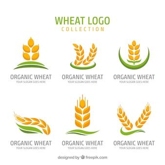 Coleção de logotipo de trigo plano