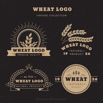 Coleção de logotipo de trigo vintage